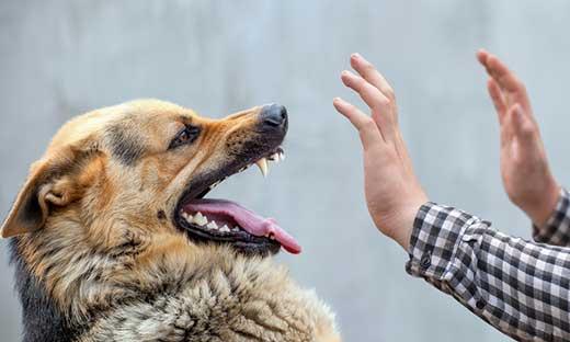 взаимоотношениях с животным миром